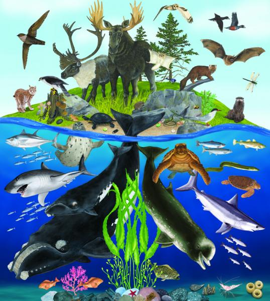 Nova Scotia Species Mural