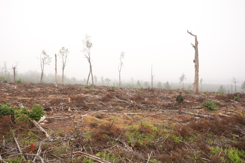 Matt Miller, Forestry Coordinator, walks through a clear cut in an Environmentally Sensitive Area on Crown lands near Panuke Lake in 2014. An independent audit of the harvest recommended that the Nova Scotia government expand Forest Stewardship Council (FSC) certification to all Crown lands in Nova Scotia.