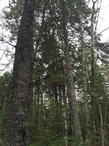 photo of the proposed clearcut