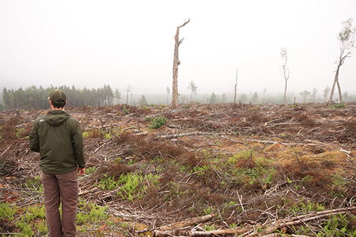 Matt Miller stands before a clear cut at Panuke Lake